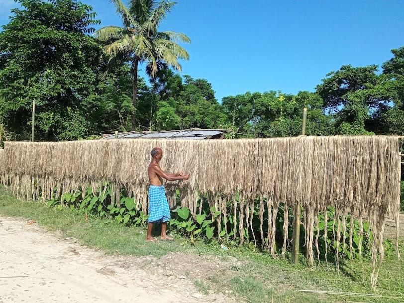 जुट खेतीप्रति कृषकको आकर्षण घट्दै